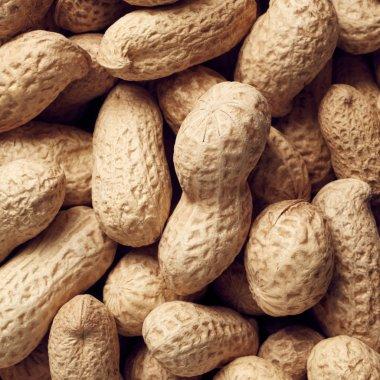 Raw peanuts, closeup