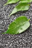 Fotografie zelené listy s kapkami vody