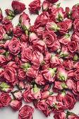 krásné růžové květy