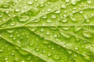 beautiful leaf texture