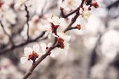 Photo Spring blooming tree