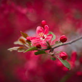 Photo Beautiful pink blossom