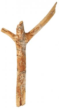 Tree stick  isolated