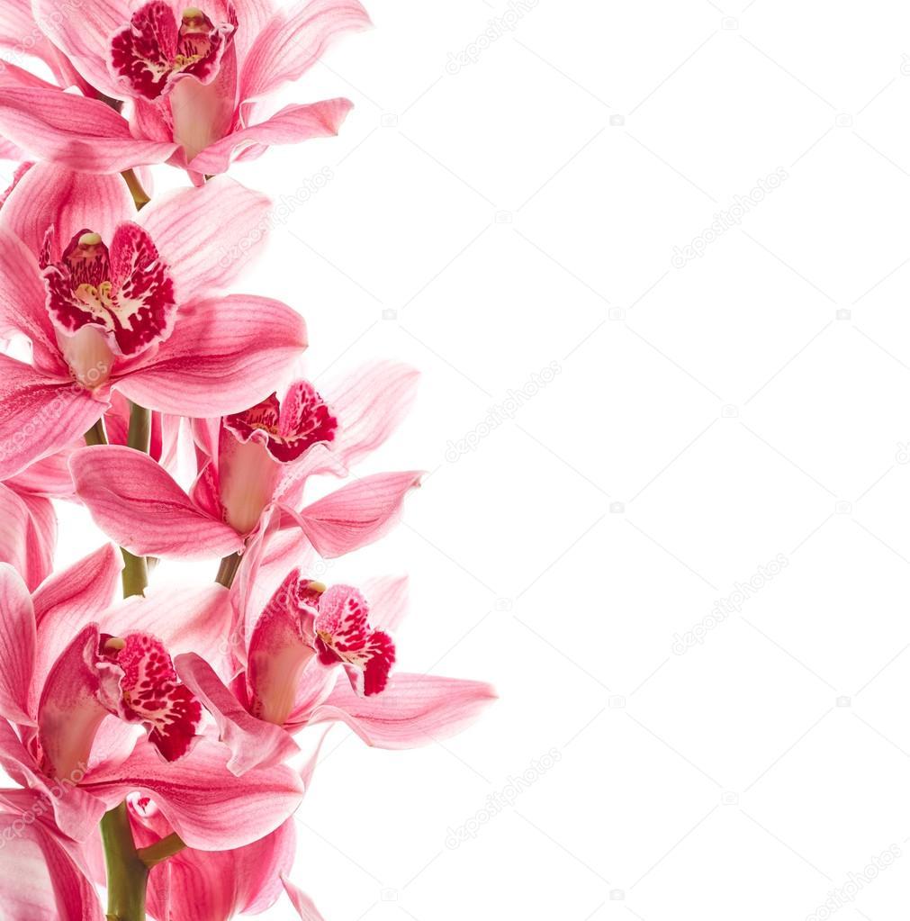 flores orquídea rosas fotos de stock nik merkulov 117695626