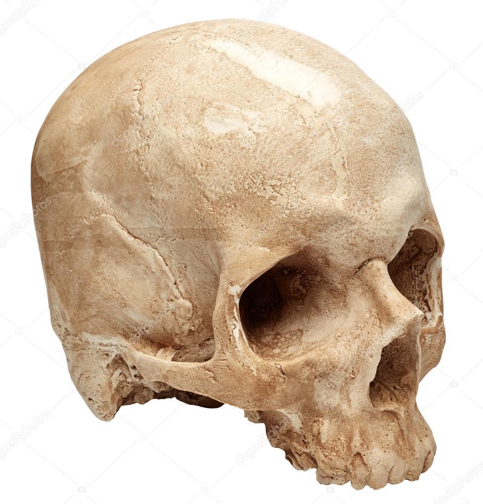 Fisiología del cráneo femenino — Foto de stock © Nik_Merkulov #118452538
