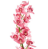 Photo Orchid flowers isolated