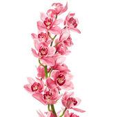 Fotografie květy orchidejí, samostatný