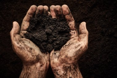 Soil in male hands
