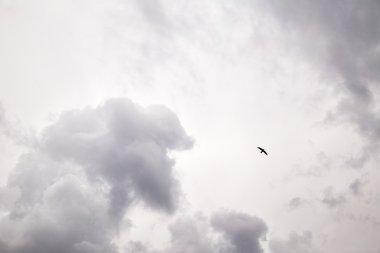 Flying bird in sky
