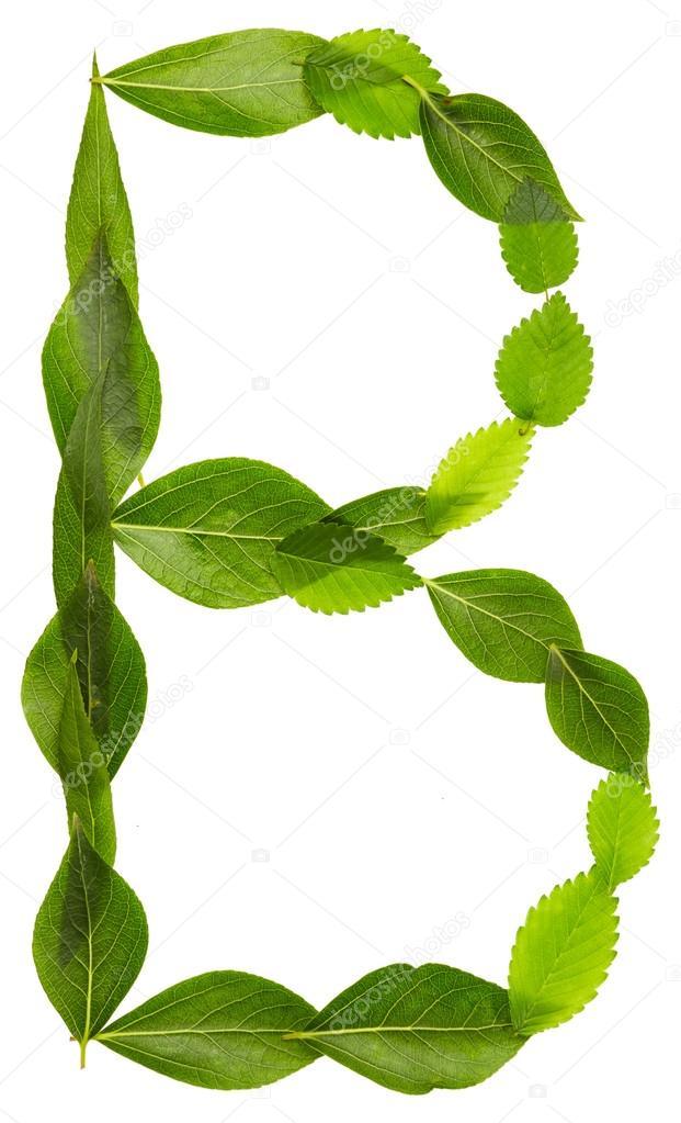 Alfabeto de hojas verdes. Letra B — Fotos de Stock © Nik_Merkulov ...