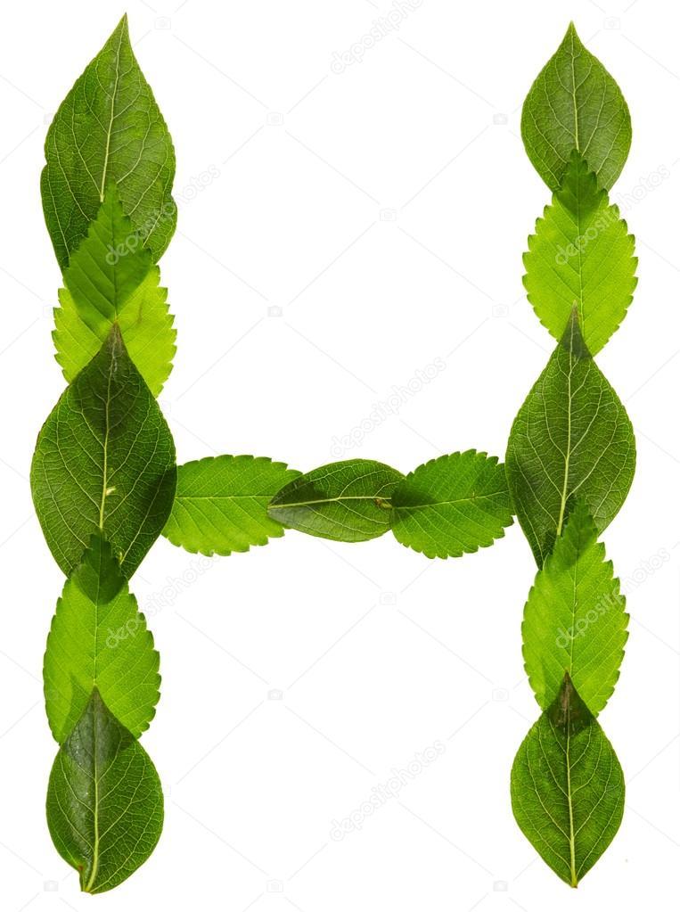 Alfabeto de hojas verdes. Letra H — Fotos de Stock © Nik_Merkulov ...