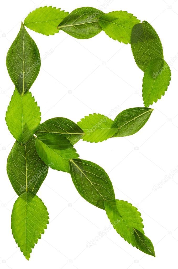 Alfabeto de hojas verdes. Letra R — Foto de stock © Nik_Merkulov ...