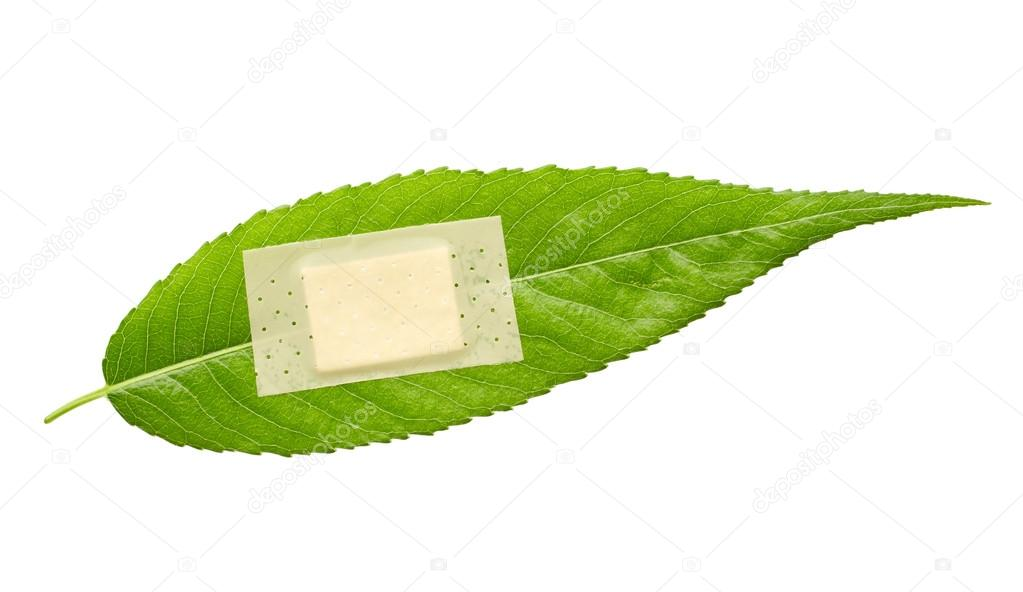 Green leaf with adhesive plaster