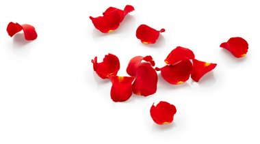 Rose petals isolated on white background