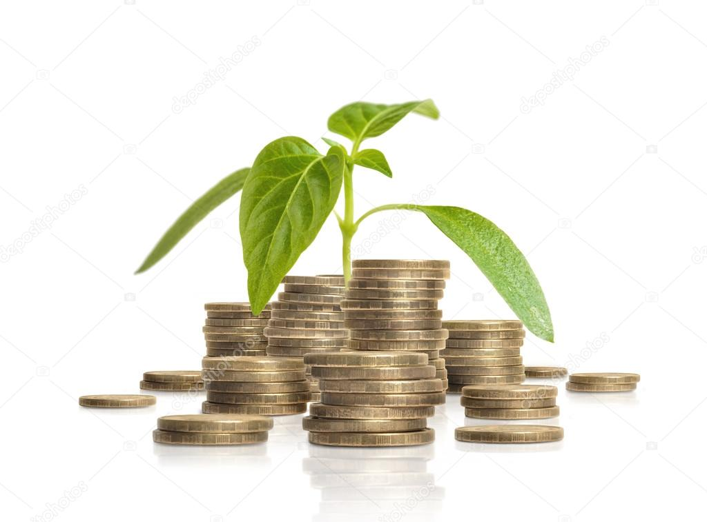 Young green sprout growing from pile of coins. Business and success concept