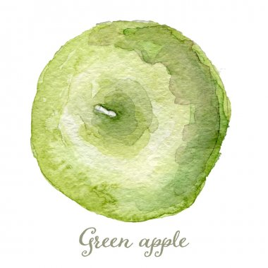 Watercolor green apple - hand painted vector