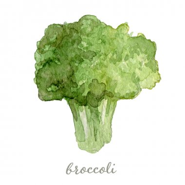 Watercolor broccoli - hand painted vector