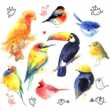 Watercolor a variety of birds