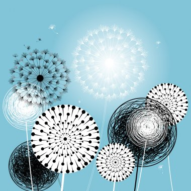 beautiful dandelions