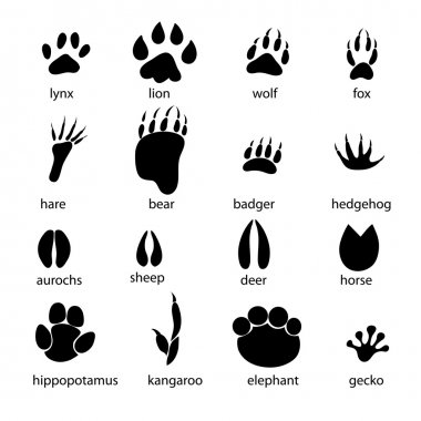 set of different animal tracks