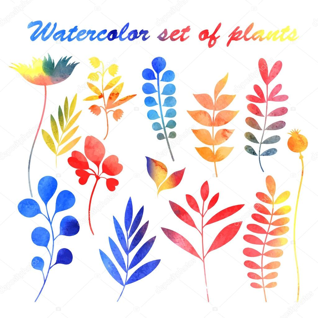 watercolor set of plants