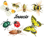 sada akvarel hmyzu