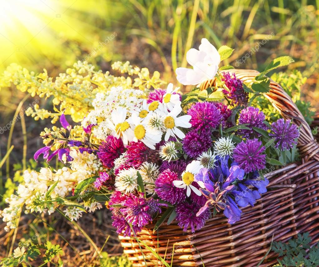 Warm summer rays on wildflowers bouquet stock photo marrakeshh warm summer rays on wildflowers bouquet stock photo izmirmasajfo