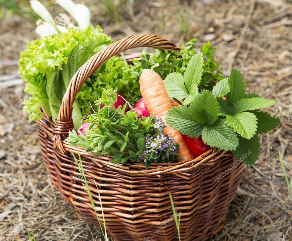 Groenten en kruiden vers geplukt uit de tuin stockfoto for Groenten tuin