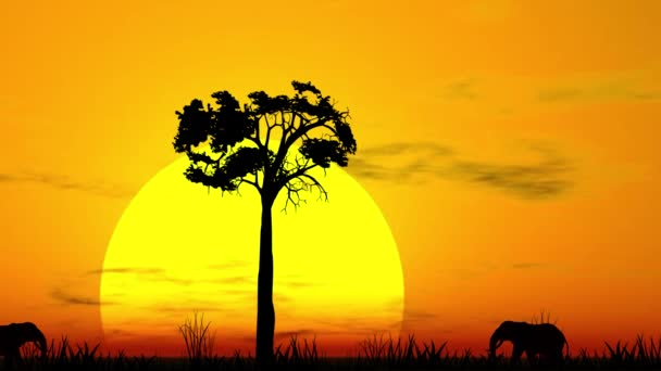Západ slunce v agrární savaně, siluety slonů