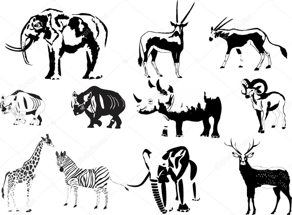 Conjunto de diferentes animales en colores negro blanco: elefante ...