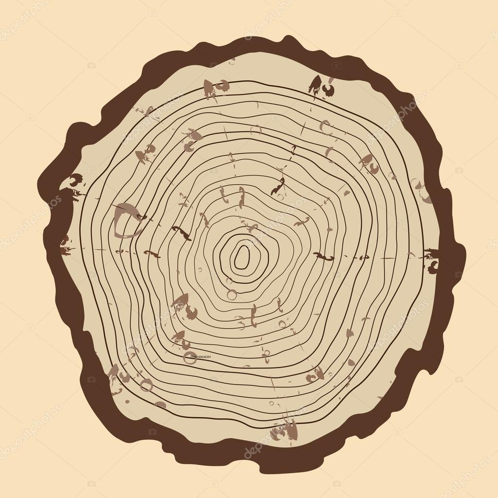 Tree rings  and saw cut tree trunk. vintage style