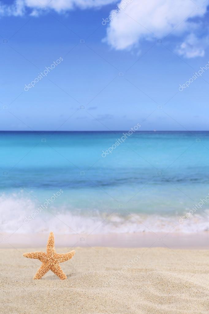 Scena Di Sfondo Spiaggia In Estate In Vacanza Con Stella Di Mare