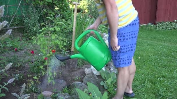 Florist man watering freshly planted ginkgo biloba tree sapling in backyard. 4K