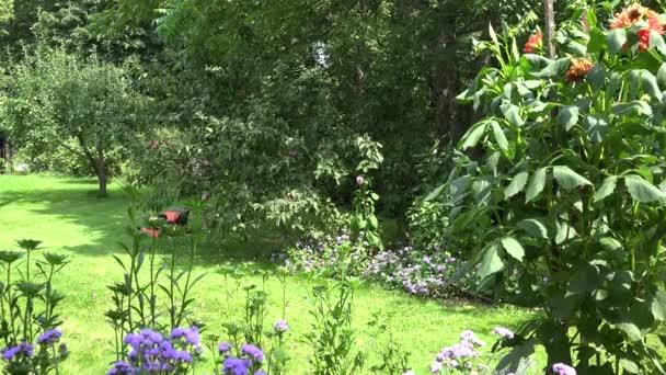 Sexy žena v šortkách a podprsenku trávit volný čas terénní úpravy zahrady. 4k