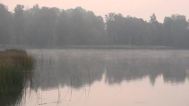 Fák és vízinövények a Ködös őszi hajnali tó-tó közelében. 4k