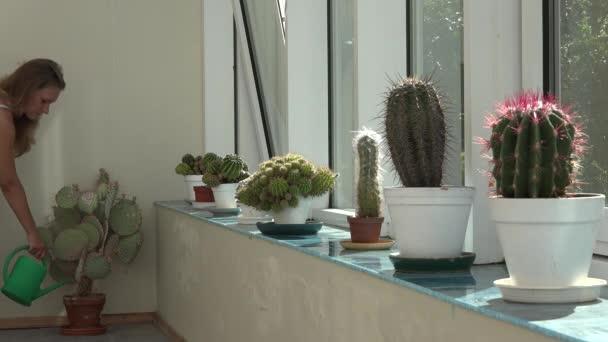 Zahradník Květinář žena zalévání kaktusů rostlina s zelenou konev v konzervatoři. 4k