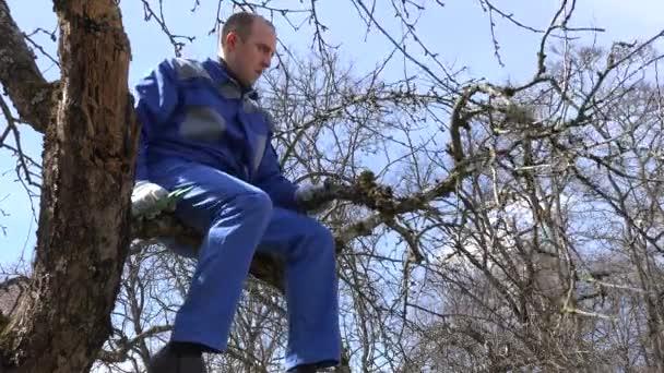 zkušený pěstitel muž prořezávání větví s nůžky vysoko na stromě na modré obloze