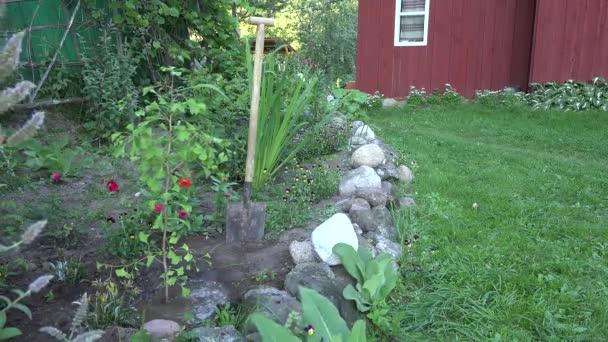 Čerstvě vysázených a napojena ginkgo biloba strom sazenice venkovských dřevěný dům dvoře. 4k