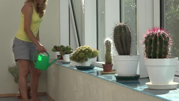 Žena, zalévání kaktusů rostlina s zelenou konev v konzervatoři. 4k