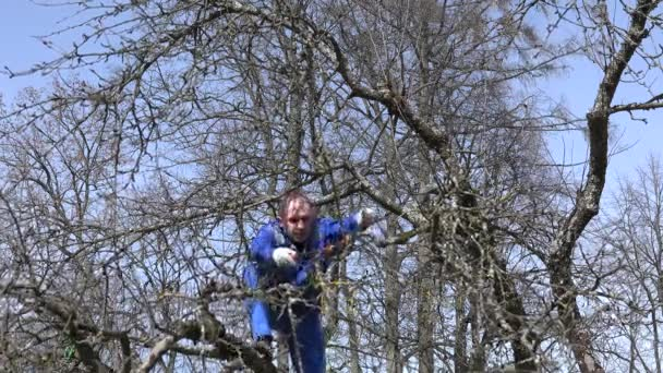 Professional gardener trimming apple tree branches with clippers over blue sky