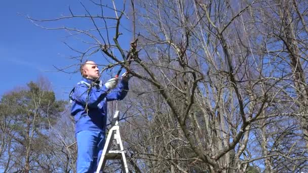 muž prořezávání strom stojící na žebříky