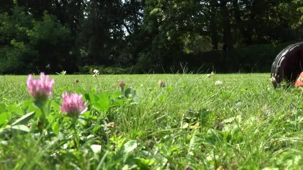 Closeup naboso zahradník muž nohy nohy nabízené sekačky posečené trávy. 4k