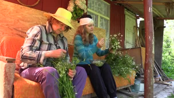 Young woman and old senior gather herbal chamomile flower