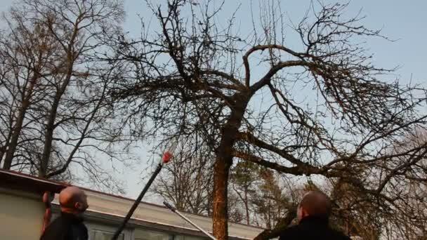 zahradník spatřil jablko větev stromu se speciálními nástrojem v zahradě