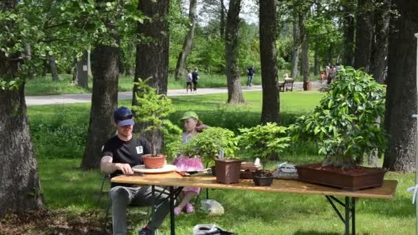 Bonsai Boom Verzorgen : Man verzorging van bonsai boom en mensen kijken planten die in markt
