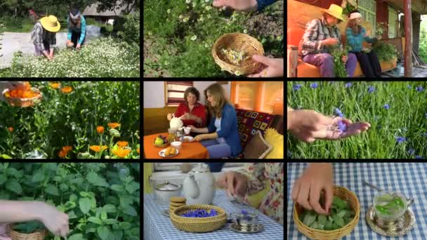 Women gather herbs and drink healthy tea. Video clips collage.