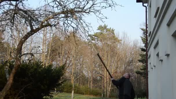 Chlap ti jablko větev stromu ovoce se speciálními nástrojem v zahradě