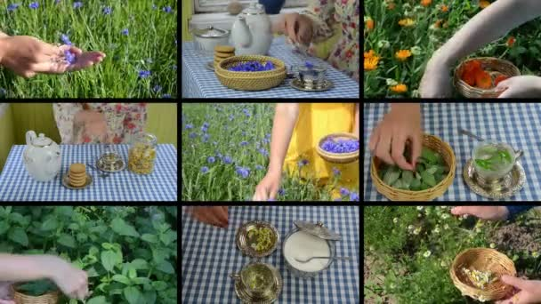 Hands gather herb plants and make herbal tea. Footage collage