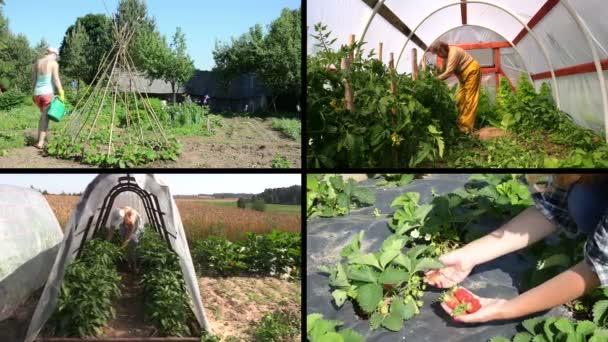 Ženy zahradník péče o rostliny a sklizeň v zahradě. Klipy koláž