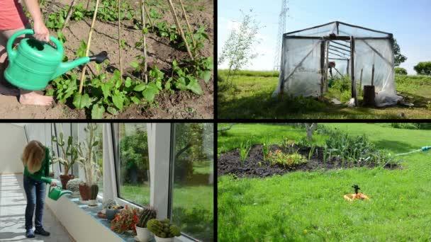 Žena, zalévání kaktusů, květiny, fazole a rajčete rostliny. Koláž